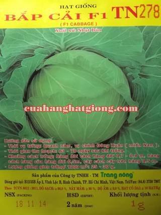 hạt giống bắp cải F1_TN278