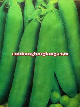 Hạt giống đậu hà lan