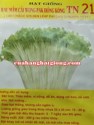 Hạt Giống Rau Mầm Cải Wong Pak Hong Kong_TN21