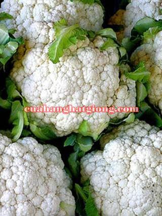 Hạt giống bông cải trắng (súp lơ trắng)