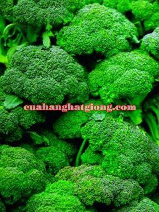 Hạt giống bông cải xanh (súp lơ xanh)
