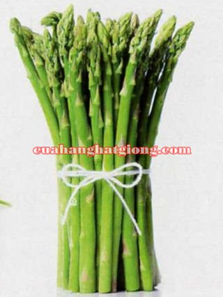 hạt giống măng tây mỹ f1